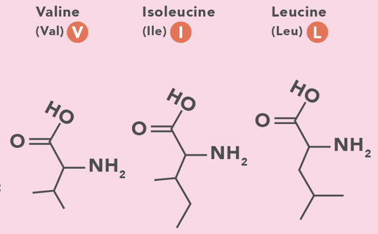 Molecular structure of Valine, Isoleucine, and Leucine
